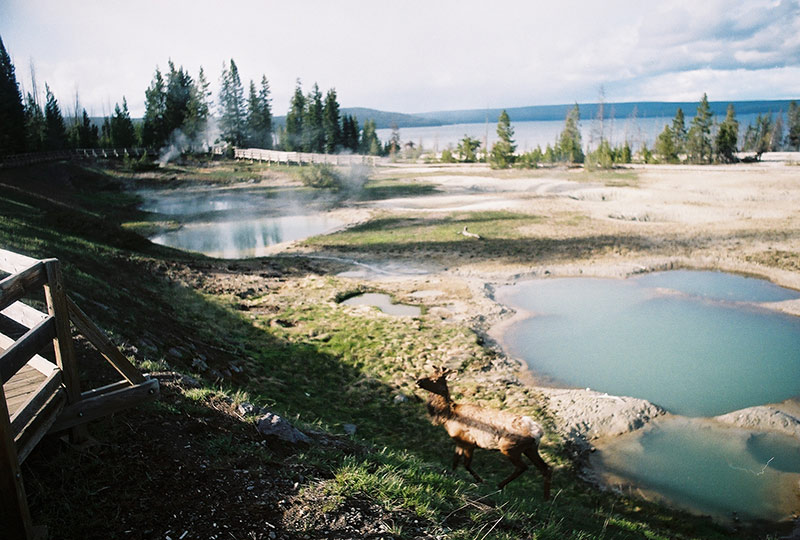 Beautiful Yellowstone
