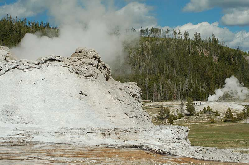 Yellowstone Geyser and trees behind