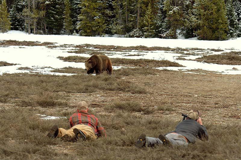 Yellowstone grizzlies bear photography