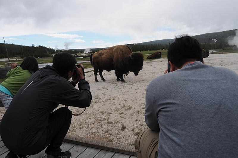 Photography in Yellowstone