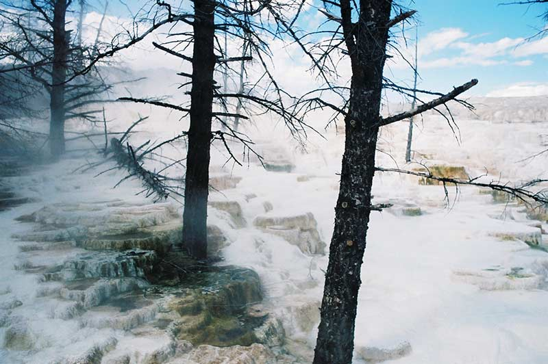 Yellowstone water geyser and trees