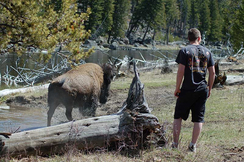 Yellowstone person walking beside bision