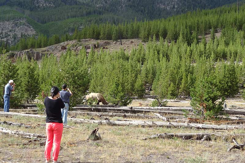 People doing photography while touring Yellowstone