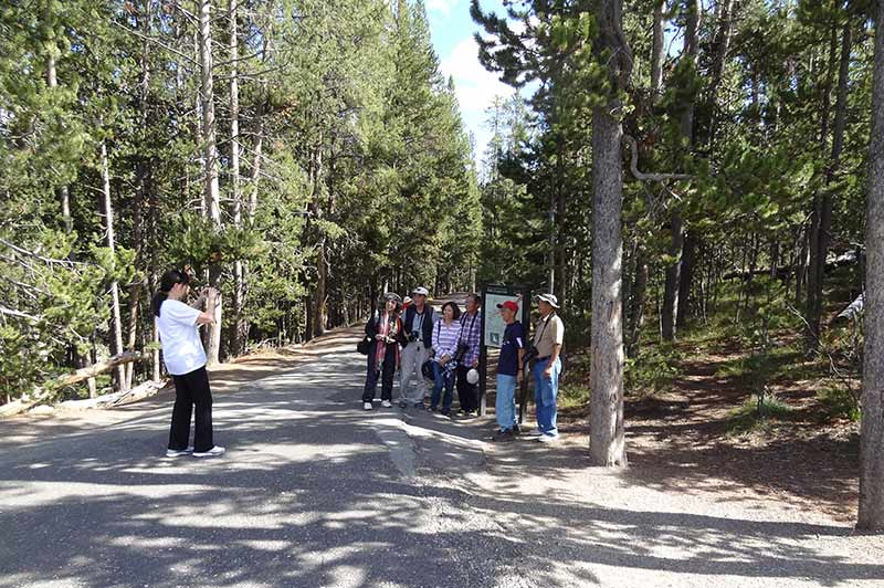 People taking photos while touring Yellowstone