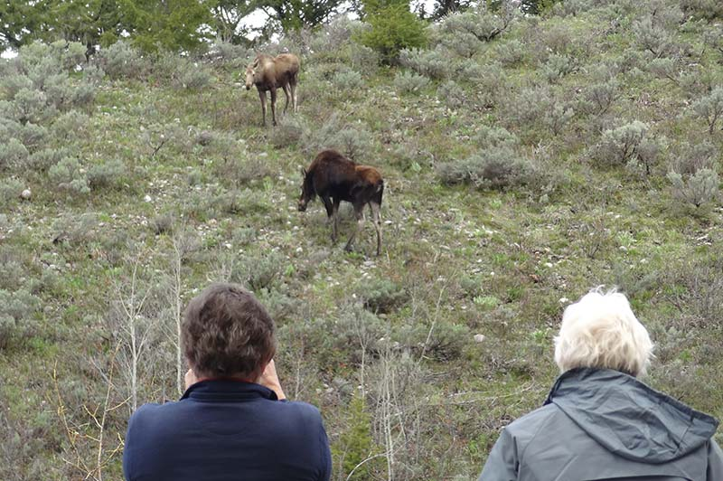 People doing photography in Yellowstone